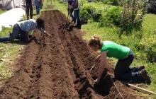 Woman planting crops in field